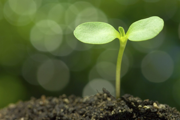 5 Essential Steps for Nonprofit Growth